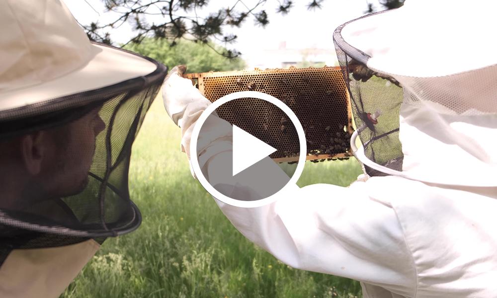 Met bijen vergroten wij de biodiversiteit op IPKW